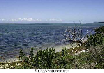 Blue Water in Florida Keys in 2021