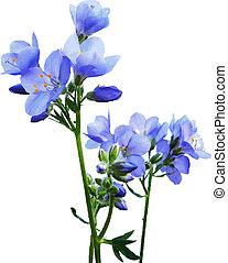 Blue Watercolor Flowers