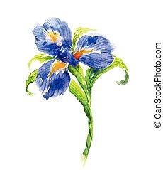 Blue watercolor iris flower