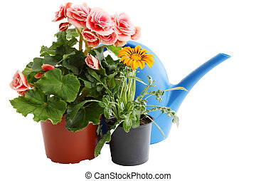 two flowers in pots