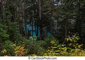 Blue Waters Peek Through Forest in Washington Wilderness