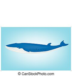 Blue whale - Illustration of the big blue whale