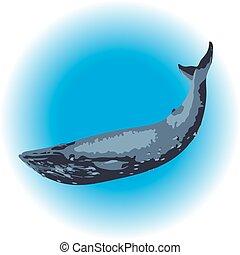 Blue whale mammal