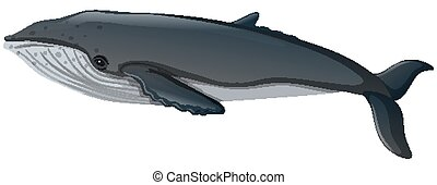 Blue whale on white background