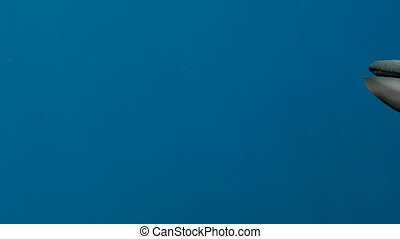 Blue Whales under the sea, 3d animation