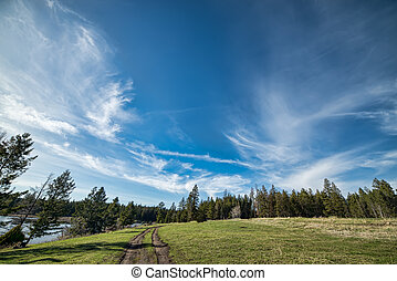 Blue Whispy Clouds in Sky above Forest