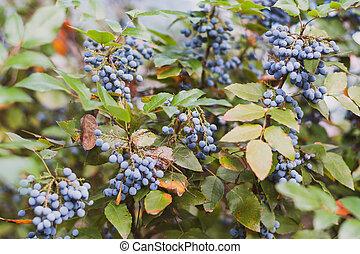 Blue Wild Berry