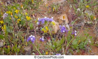 blue wildflowers. closeup