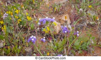 blue wildflowers. closeup