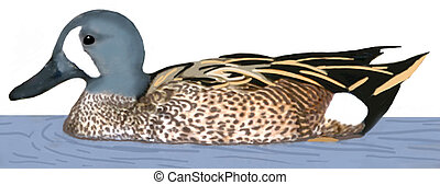 blue-winged, teal