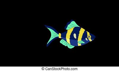 Blue- yellow Aquarium Fish Alpha Matte looped - Big Blue-...