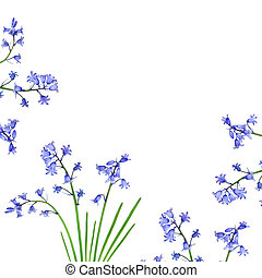 Bluebell Border - Bluebell flowers forming a border and set...