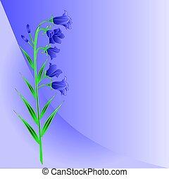 bluebell, campanula, pradera