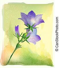 bluebell flower
