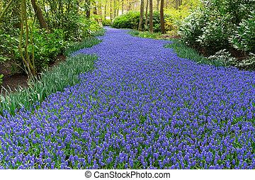 bluebell flowers river
