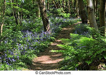 bluebell, madera