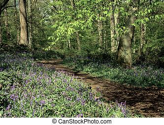 Bluebell Wood Hertfordshire