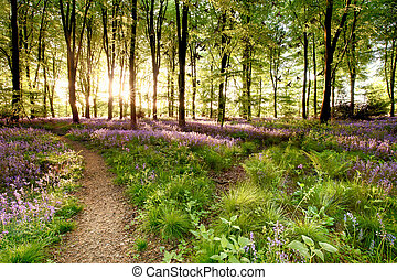 Bluebell woods with birds flocking through the trees duing...