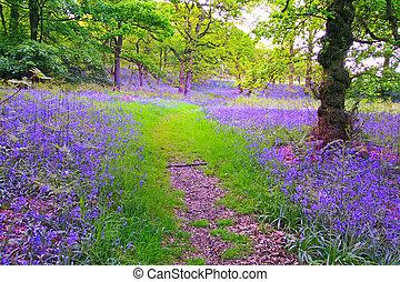 bluebells, bosque