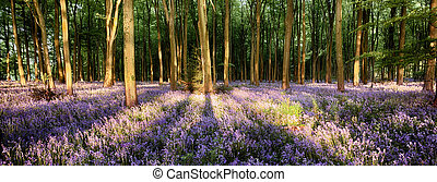 Bluebells in shadows - Bluebells in long tree shadows...