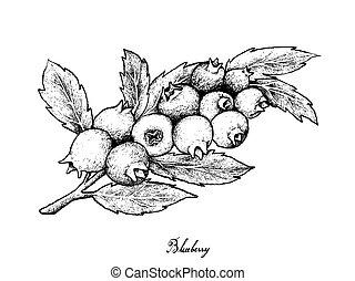 blueberries, 익은, 손, 배경, 그어진, 백색