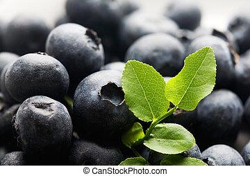 Blueberries - Bunch of fresh blueberries