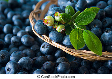 Fresh bluberries with leaves