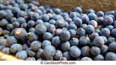 Blueberries in basket 4k - Close-up of blueberries in basket...