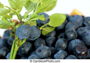Blueberries - Sprig with blueberries in front of berries...