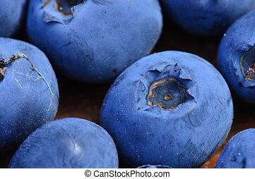 Blueberry berries forest marsh fresh natural ripe