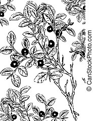 Blueberry. - Blueberry with leaves. Vector art-illustration...