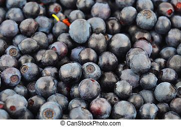 Blueberry, close up