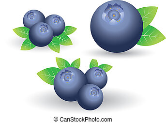 Blueberry - Set of Blueberry on white background