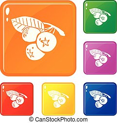 Blueberry icons set vector color