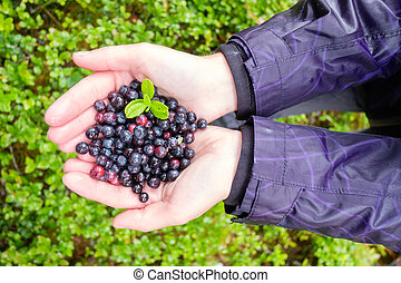Blueberry in girl hands