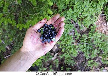 Blueberry in man hand