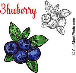 Blueberry vector sketch berry fruit icon - Blueberry berry ...