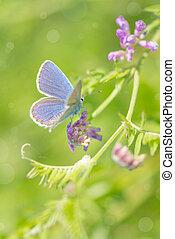 Bluebird butterfly on a summer meadow