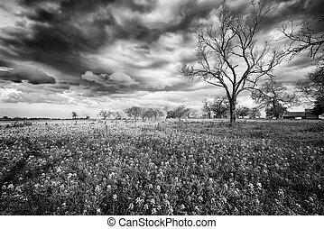 Bluebonnet Fields in Texas