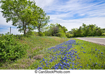 bluebonnet, pays, long, texas, route