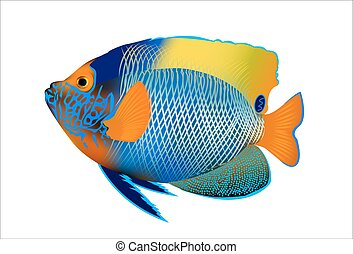 blueface angelfish