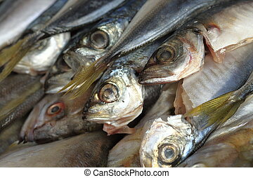 bluefish, gutted