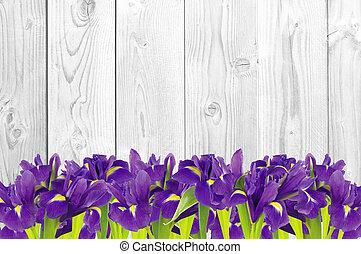 blueflag, eller, iris, blomma, vita, trä, bakgrund