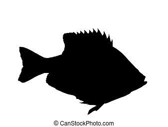 Bluegill fish silhouette isolated - Bluegill sunfish...
