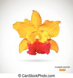 blume, bild, vektor, hintergrund, weißes, orchidee