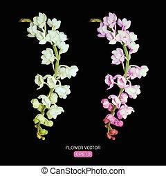 blume, bild, vektor, schwarzer hintergrund, orchidee
