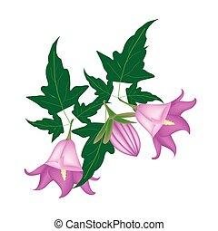 blume, hintergrund, glockenblume, rotundifolia, zweig, weißes