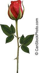 blume, hintergrund, mit, a, schöne , rotes , rose., vector.