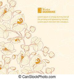blume, label., orchidee