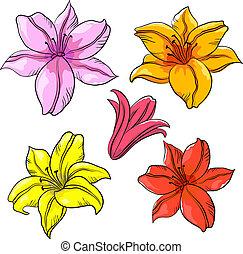 blume lilie lilie blume liebe freigestellt geschenk. Black Bedroom Furniture Sets. Home Design Ideas